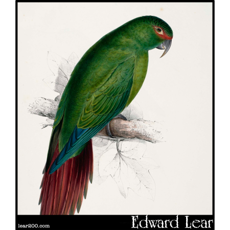 Psittacara leptorhyncha, the Long-Billed Parakeet-Macaw