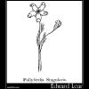 Pollybirdia Singularis