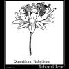 Queeriflora Babyöides