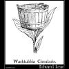 Washtubbia Circularis