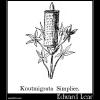 Knutmigrata Simplice
