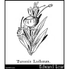Tureenia Ladlecum