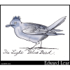 The Light Blue Bird