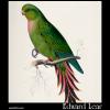Palaeornis rosaceus, the Roseate Parakeet