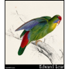 Psittacula rubrifrons, Red-Fronted Parakeet